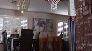 My friends dog can dunk a basketball