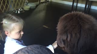 Future Lion Tamer? - Video