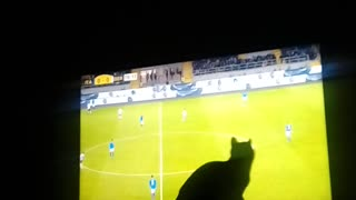 cat wants to catch the ball
