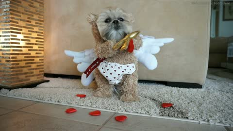 Dog transforms into Cupid to spread Valentine's Day love