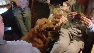 Dog Does The Trick But Baby Gets The Treat - Video