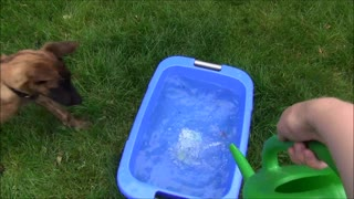 Puppy likes playing with water - Video