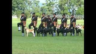Trained military canines captivate civilians at Indian dog show - Video