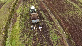 Aerial View   A family Bringing Home The Turf From an Irish Peat Bog - Video