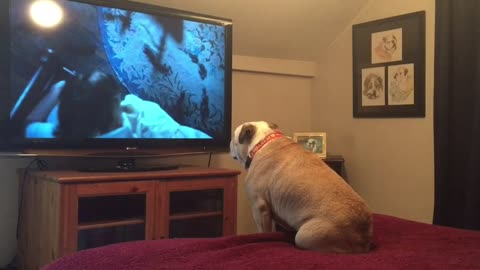 Bulldog tries to warn little girl of danger in horror movie