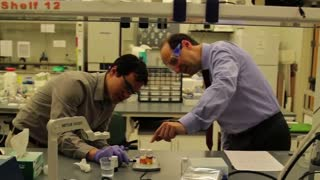 Research aims to develop eco-friendly nanoparticles for pesticides