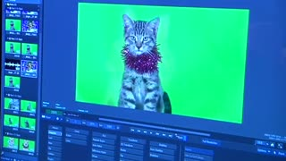 'Jingle Cats' go animated for another purr-fect holiday song - Video