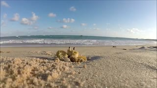 Curious Crab on Camera