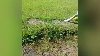 Dog Barks Up The Wrong Stick - Video