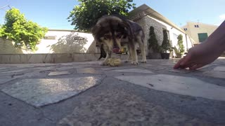 My lovely dog - Video