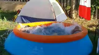 Guy does some olympic swimming in a kiddy pool