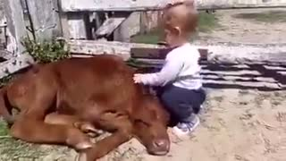 A Baby Like a Cow - Video