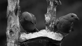 Black & white Birds 05