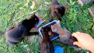 Feeding our hungry kittens a mix of WHISKAS and solid food