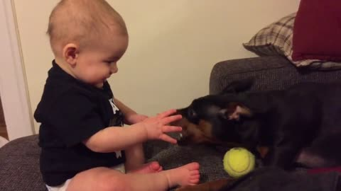 Baby finds dog playing with toy absolutely hilarious