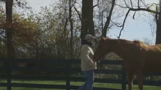 Horses Heal Returning Veterans' PTSD - Video