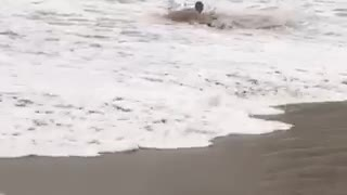Guy tries to skimboard on the beach and ends up getting knocked over by wave