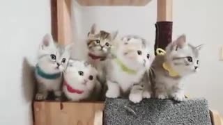 Your daily dose of cuteness! - Video