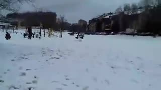 Dog Play on First Snow - Video
