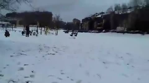 Dog Play on First Snow