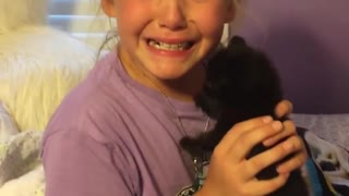 Little girl is surprised with a brand new kitten - Video