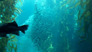 Upside Down Swimming Fish Upsets Baby! - Video