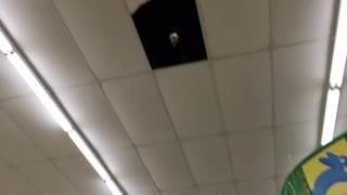 Dollar Tree Store Leaking Fire Suppression Sprinkler Head