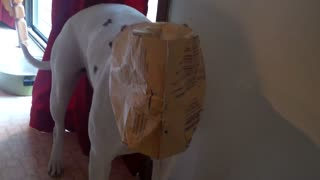 Dog Get's Trapped In Popcorn Bag