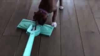 Funny Dog Videos - Playtime is much more fun than whatever - Video