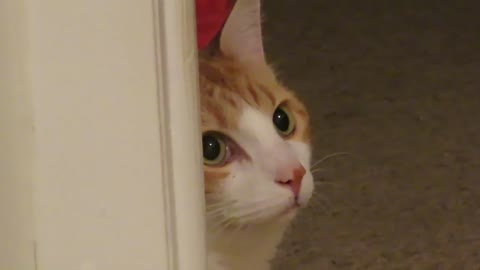 Insane cat intensely stares at absolutely nothing