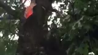 Tree Struck by Lightning - Video