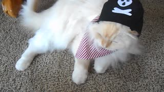 Cat pirate  - Video