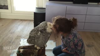 Little Girl and Owl Are BFF - Video