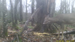 Squirrel and Little Buck Share Supper