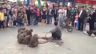 Monkeys talent  - Video