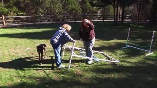 Dog Gets Owner To Jump Through Hoops - Video