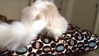 "Dog understands when you say ""Move your hiney"" - Video"