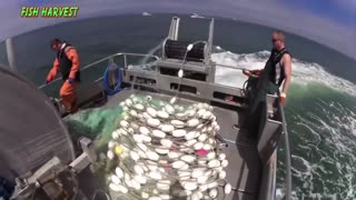 Everyone should watch this Fishermen's video Most Satisfying Big Catch Fishing