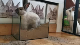 Do you like rabbits?Watch this cute rabbit