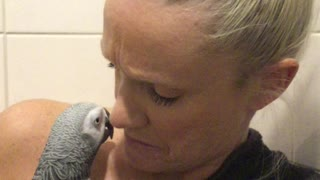 Parrot ask mommy for cuddles before shower