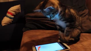 Cat plays touch-screen fishing game on owner's smartphone - Video