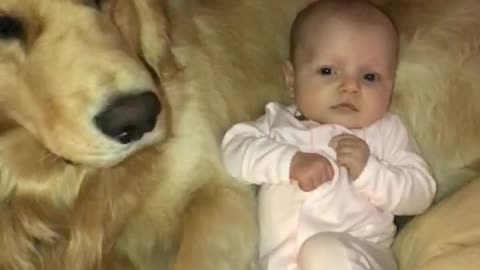 Baby preciously snuggles with gentle Golden Retriever