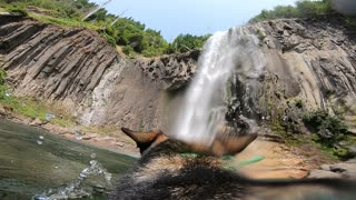 GoPro-wearing pup plays fetch in giant waterfall