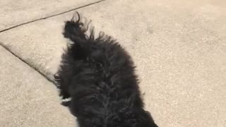 Shaggy black dog slow motion catch blue ball mouth