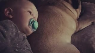 Best friends forever: Baby and pug share very special bond