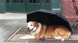 Dog outside coffee shop with umbrella