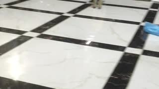 Puppy Makes a Break for Freedom and Fails