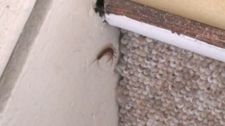Centipede on the Stairs - Video