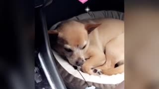 A Place for DOgy To sleep in the Car