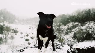 Black dog sits in the snow  - Video